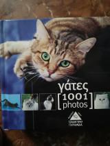 Γάτες [1001 photos]